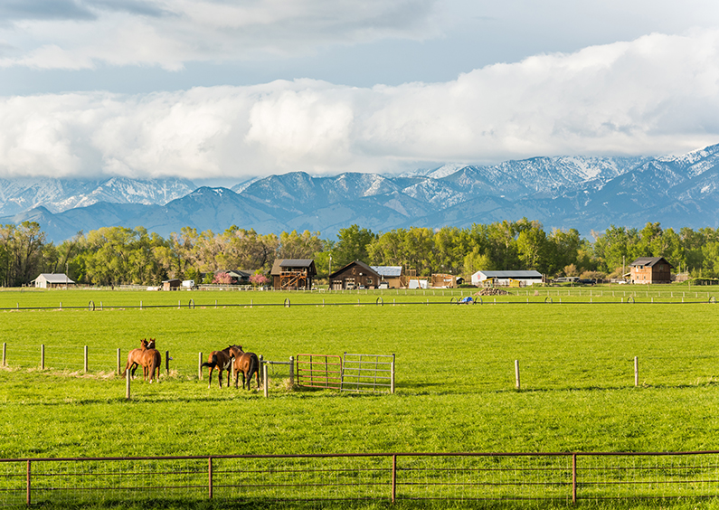 Two horses in a field in front of a Montana town.